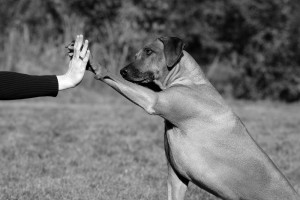 High Five_20793491_m-2015 - B&W
